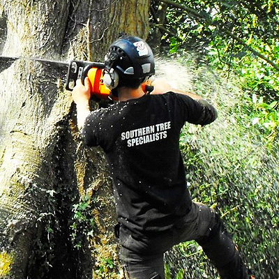 southern tree specialists